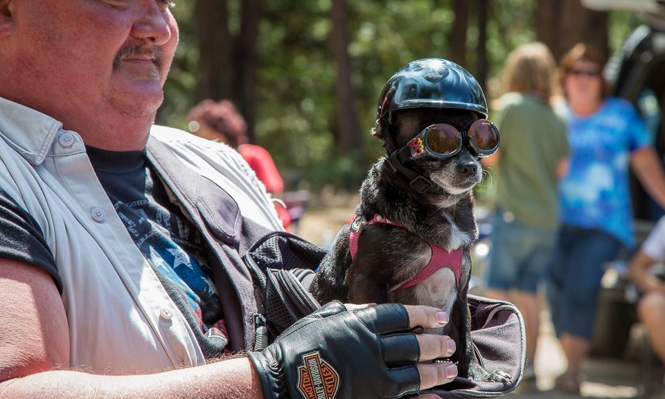Too Cool Biker Pup