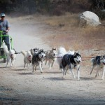 Urban Mushing