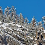 Snow-covered Trees on Suicide Rock